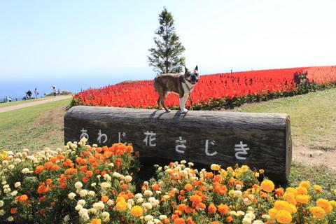 淡路2013秋 1002-001