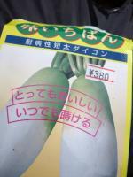 20110828味いちばん大根