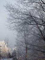 20140123朝陽と樹氷09