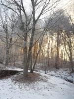 20140123朝陽と樹氷
