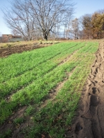 20141122秋の畑作り3