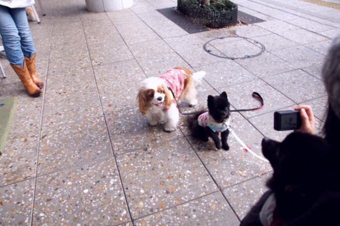 blog_DSC07947.jpg