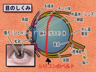 目の仕組み シリコンのベルト