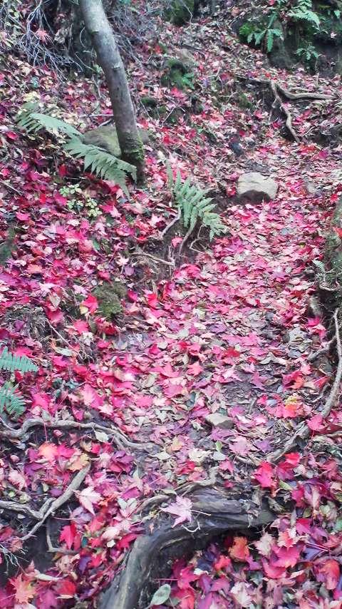 神山紅葉落ち葉9