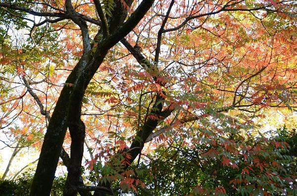 岡山県岡山市北区後楽園  岡山後楽園  秋の紅葉