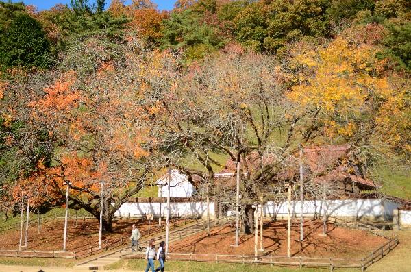 岡山県備前市閑谷  特別史跡旧閑谷学校  秋景色