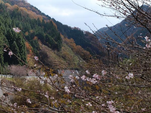 高知県いの町桑瀬 道の駅 木の香温泉周辺 寒風山トンネル周辺