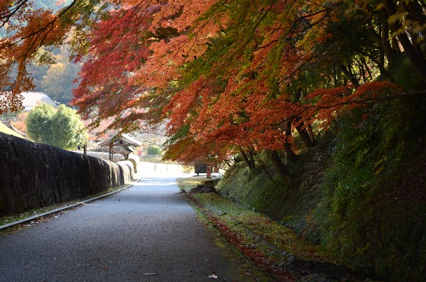 岡山県備前市閑谷 旧閑谷学校 石塀亭付近の紅葉