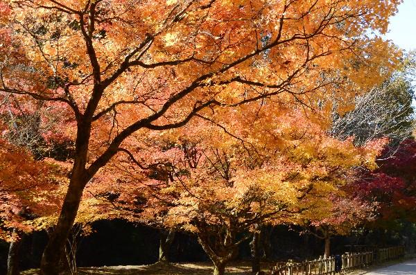 岡山県備前市閑谷 旧閑谷学校 黄葉亭付近の紅葉