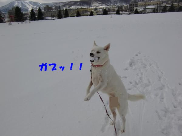 CIMG9255_convert_20130305110329.jpg