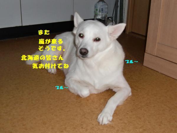 CIMG9275_convert_20130308231159.jpg