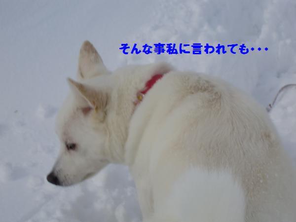 CIMG9372_convert_20130322220906.jpg