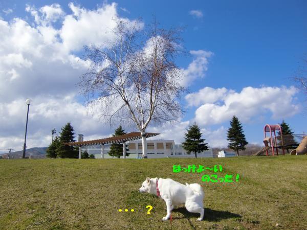 CIMG9611_convert_20130421165715.jpg