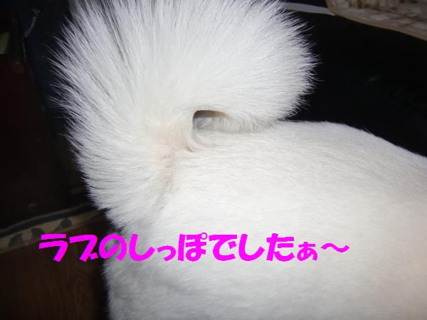CIMG9708_convert_20130430225258.jpg