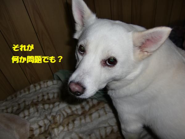 CIMG9709_convert_20130430225318.jpg