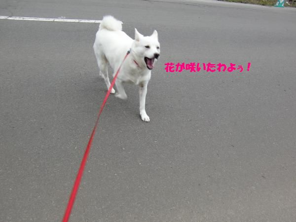 CIMG9740_convert_20130503201425.jpg