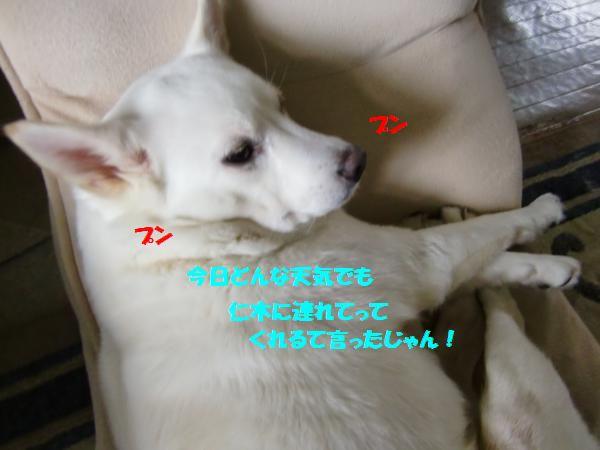 CIMG9743_convert_20130506131614.jpg