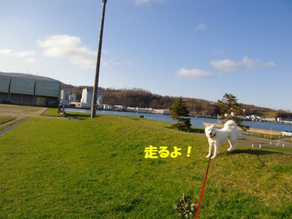CIMG9746_convert_20130507173601_20130508220024.jpg