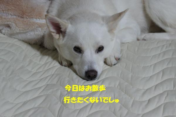 DSC05984_convert_20130516101222.jpg
