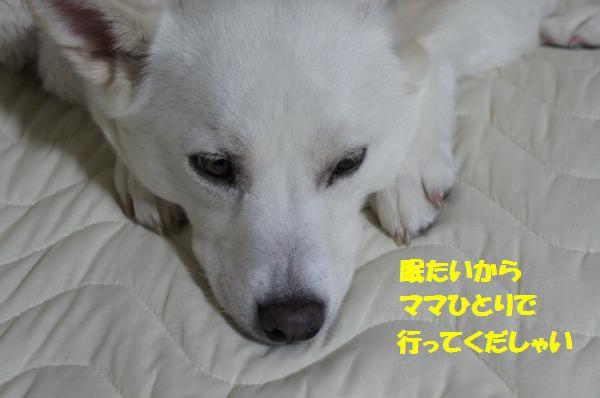 DSC05985_convert_20130516101247.jpg