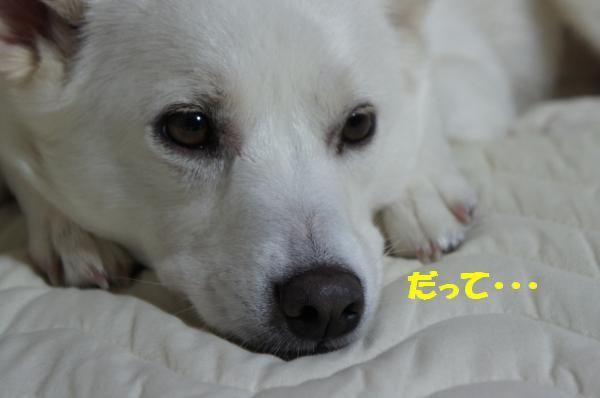 DSC05988_convert_20130516101338.jpg