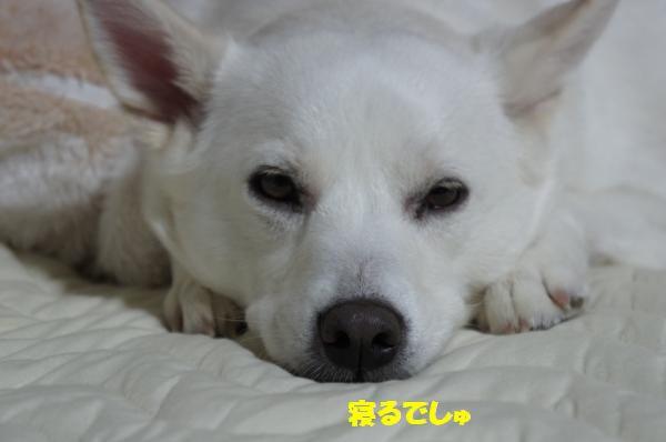 DSC05992_convert_20130516101146.jpg