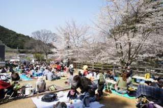 山中渓の桜02