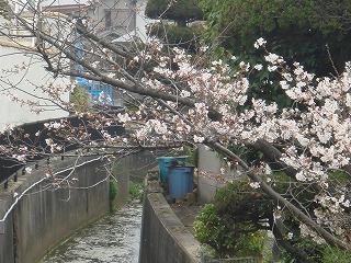 岸和田の春04