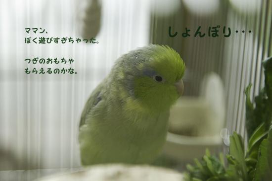 0S1W9941-3.jpg