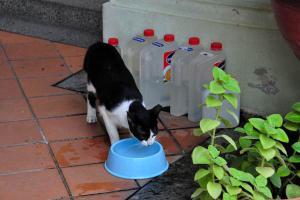 Singapore Street Cat Dawn