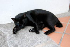 Singapore Street Cat Midnight