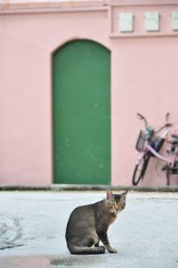 Singapore Street Cat Sunny