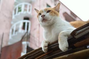 Singapore Street Cat Cloudy