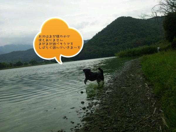 広沢の池に入る黒犬