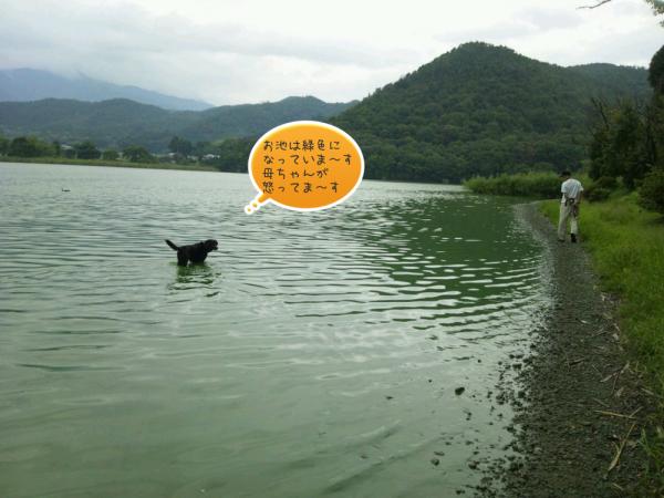 池に入る黒犬2