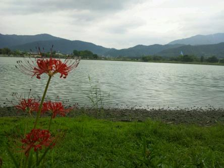 彼岸花と広沢の池