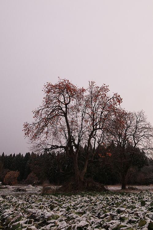 2012-1210-a-00031.jpg