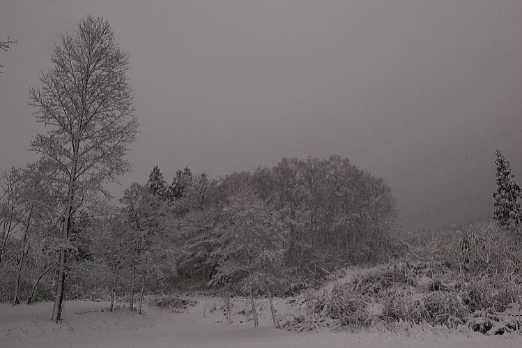 2012-1214-a-00031.jpg