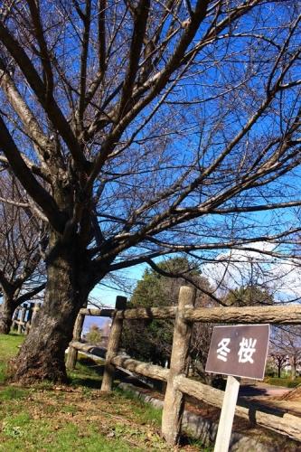 桃源郷公園22