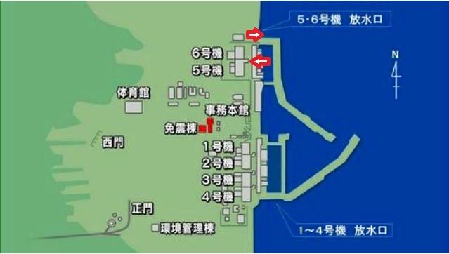 5・6号機を介して湾内から汚染水がダダ漏れにされている
