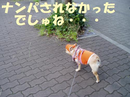 111_10convert_20110926231242.jpg
