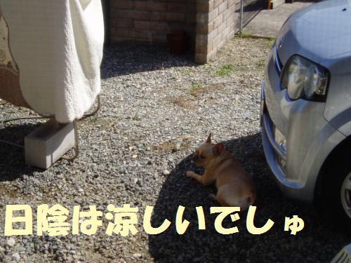 111_1convert_20110926230722.jpg