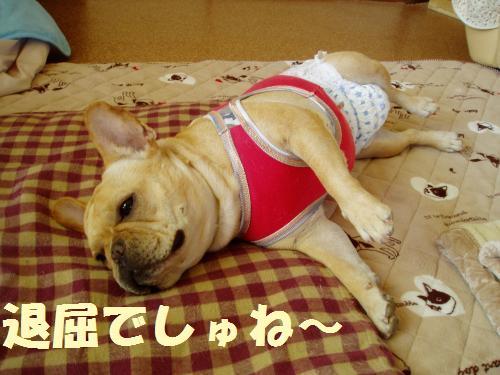 111_4convert_20110926230921.jpg
