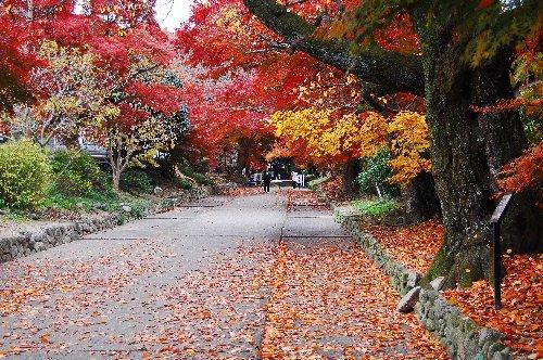 鷲森神社1