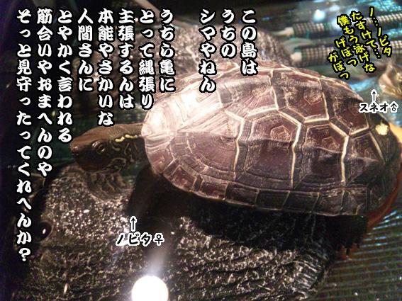 SH3G0003.jpg
