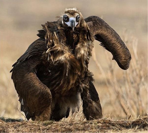 ugliest-bird-alive.jpg