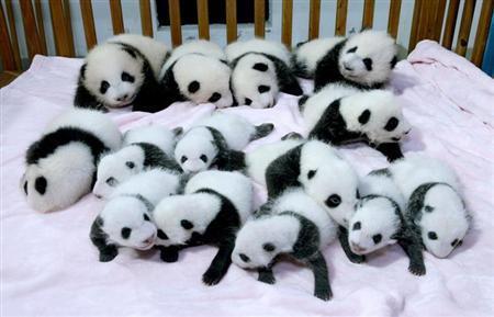 パンダ14匹