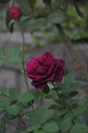 berry20121014.jpg