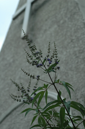 blueg2012702-2.jpg