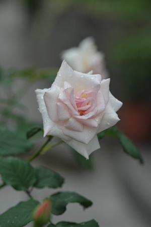 ophelia2012630-1.jpg